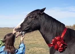 gift_horse